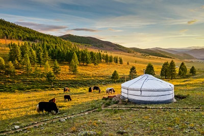 expat filing taxes in mongolia