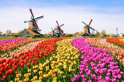 Taxes for Expats – The US – Netherlands Tax Treaty